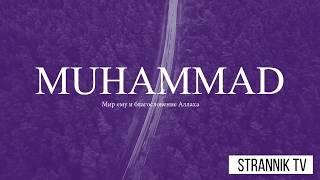 Творения Аллаха! Эмоциональное видео
