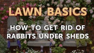 How to Get Rid of Rabbits Under Sheds
