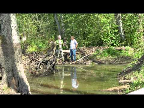 Latvijas Valsts meži par bebraiņu apsaimniekošanu