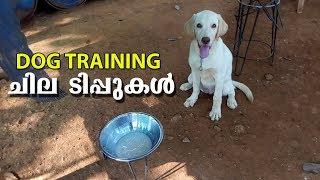 Dog Training ചില ടിപ്പുകൾ  L Labrador Dog L Dog Farming Kerala