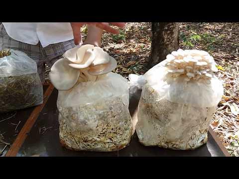 Como distinguir um fungo de pregos de mãos