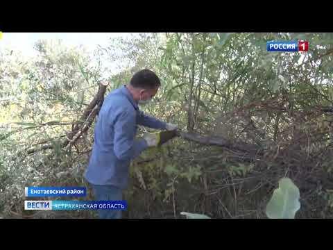 В Астраханской области Управлением Россельхознадзора выявлено более 100 га земель сельхозназначения неиспользовавшихся по назначению
