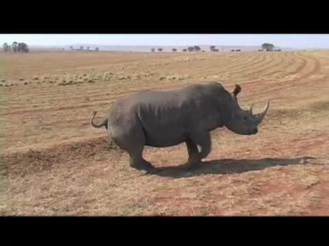 """Green"" Rhino Hunt"