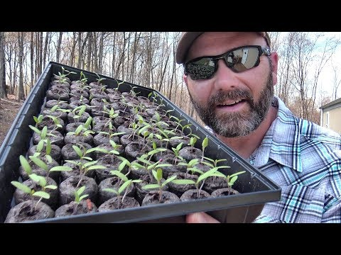 SEEDLINGS HAVE SPROUTED...SO WHAT'S NEXT?? GARDENING AND PLANTING TIPS/TRICKS FOR SUCCESS! JI