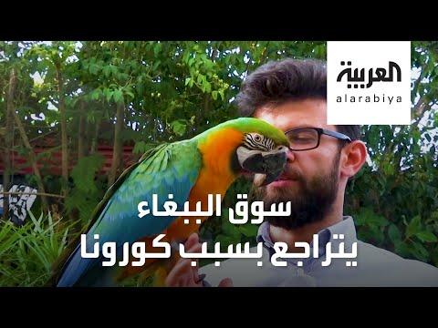 العرب اليوم - شاهد: كورونا يضرب سوق الببغاء ومربيه ومحبيه!