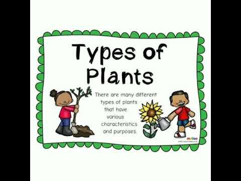 BINGO-2020 Grade-I #Plants