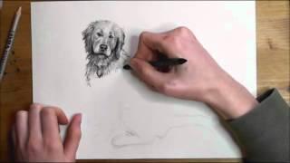 Comic-Hund zeichnen lernen