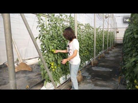 HDL Un sistema de calefacción para invernaderos convierte los residuos agrícolas en combustible