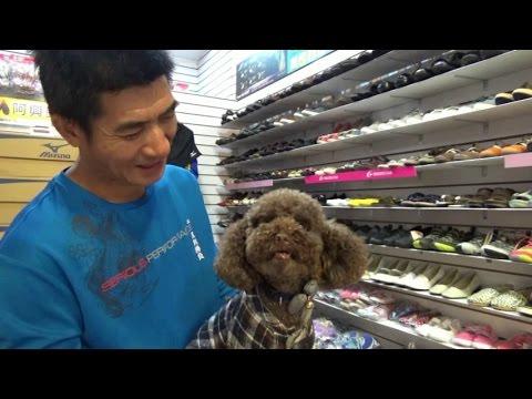 """【央廣德語】Hunde in Taiwan    台灣狗  """"好狗命"""""""