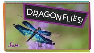 Super Strong Dragonflies!