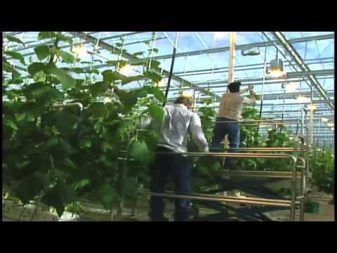 High Tech Greenhouse
