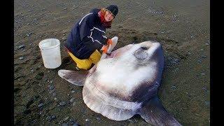 Most Bizarre Sea Creatures