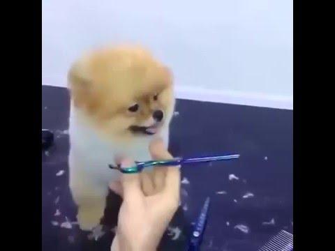 desi funny dog