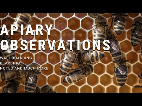 , title : 'Apiary Observations | Beginner Beekeeper Episode 12