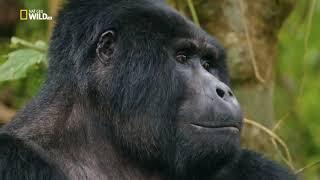 НОВИНКА!!! Дикая Уганда   2019   Документальный фильм  Discovery