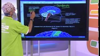 The Nervous System: Grade 12 Life Science