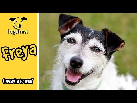 Meet Freya! | Dogs Trust Shoreham
