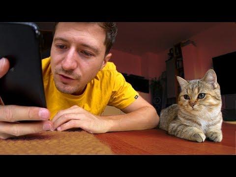 Intelligenztest mit den Babykatzen! 🤔