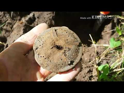 Metal detecting buttons, bullets and relics with the Nokta Fors Relic