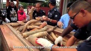 OpWorldAnimal 1ra Etapa-TraficoAnimal - ComercioAnimalesExoticos