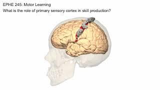 Primary Sensory Cortex