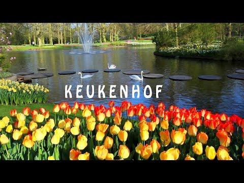 Keukenhof es el Jardín de Europa, es uno de los mayores jardines de flores del mundo  Full HD