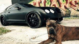 OUTLAWS - Custom Black Bentley Continental
