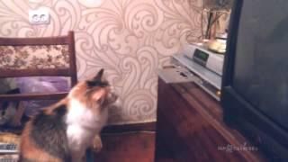 Wy cats hates CD-ROM? Почему кошки не любят CD проигрыватели? - Video Youtube