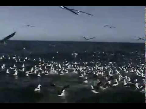 albatros en alta mar. ARGENTINA