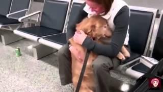 สุนัขร้องให้...เมื่อรู้ว่า เจ้านายจากไป