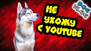 DOGVLOG: ХАСКИ НЕ УДАЛЯЕТ КАНАЛ... Говорящая собака
