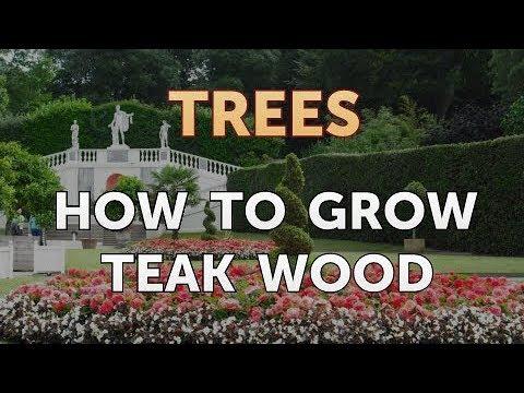 How to Grow Teak Wood