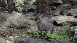 Taronga Zoo Sydney, Sydney