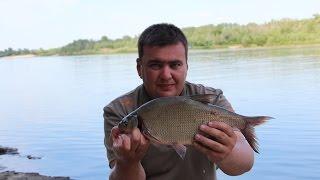 Выходные с фидером на реке 3 (Дневник рыболова)