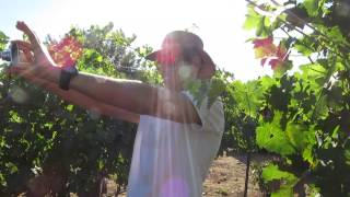 preview picture of video 'Kibbutz Ortal Vineyard, Golan Heights, Israel. Tour Guide: Zahi Shaked'
