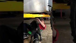 animales perros calientes