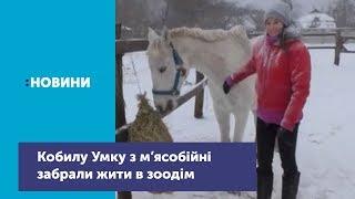 У зоодомі Марина Грицик поповнення кобилою Умкою: почали будувати конюшню й леваду