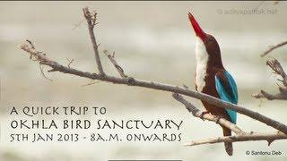Okhla Bird Sanctuary - sights n sounds - adityapathak