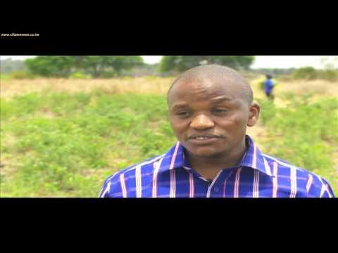 Growing Chillie in Kenya for export