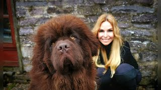 THE NEWFOUNDLAND DOG - WORLD'S MOST POWERFUL WATER DOG