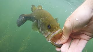 Clearest Water Ive Ever Fished Mtb Bass Fishing Tournament