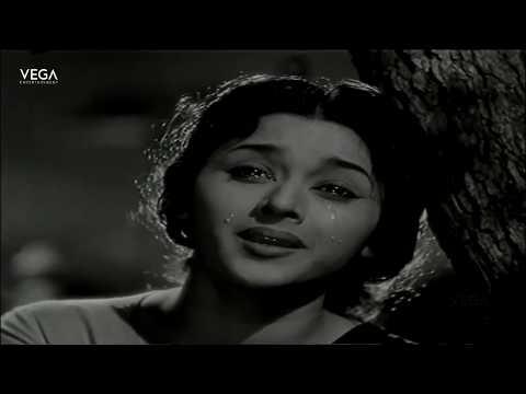 Sollaale Veenaanadhe Full Video Song | Raja Rani Tamil Movie | Vega Tamil Movies
