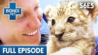 🦁 Abandoned Cub Lion From Mother | FULL EPISODE | S06E05 | Bondi Vet