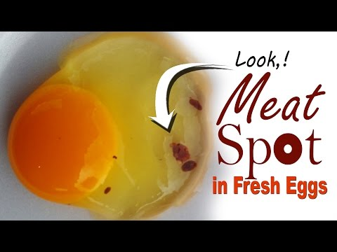 Field Case Study, Blood Spots in Egg Whites, Infectious Bronchitis in Chickens, Poultry Farming