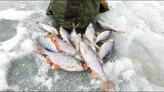 Зимняя рыбалка на Оке.Вертолёты или безмотылка,кто выиграл.ч2