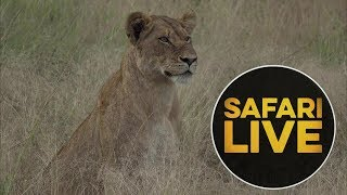 safariLIVE - Sunset Safari - May, 18. 2018   Kholo.pk