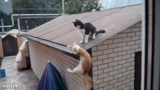 Смех!Юмор!Самые смешные животные Новое  + Best Funny Animal Fail Compilation HD