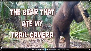 The Bear That Ate My Trail Camera