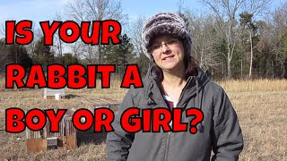 Male or Female Rabbit?  How to Tell the Difference.