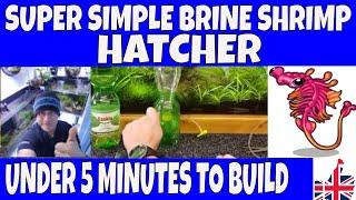 DIY BRINE SHRIMP HATCHERY